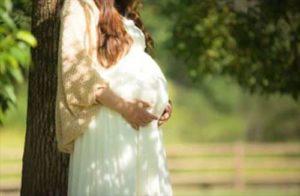カモミール 妊婦