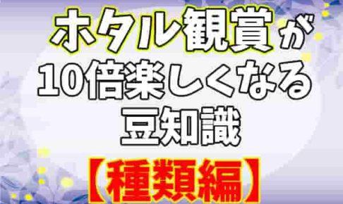 蛍鑑賞 種類編-